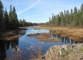 Wetlands: Jewels or Nightmare