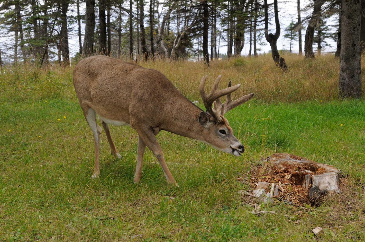 Some Tips To Make You a Better White-Tailed Deer Hunter
